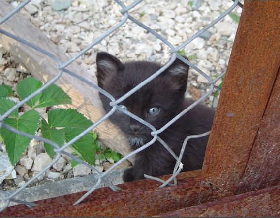 野良犬が狙っている!撮影プランを子猫救出のために変更したカメラマン