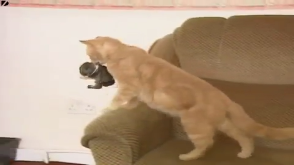 「ほら、お家帰るよ!」お母さん猫が連れて帰ったのは・・・ウサギの赤ちゃん!?