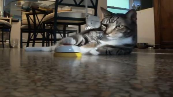 「カリカリをひとつ…」ベルを鳴らすとおやつをもらえることを学習した猫ちゃんがカッコイイ(笑)