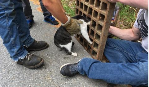抜けなくなった猫に消防隊が出動!『お騒がせしてすみません。』
