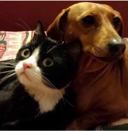 『あなたのことは私が必ず守るわ』小さな犬に守られた歩けない小さな猫