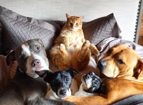 犬4匹にアヒル2羽☆みんなまとめて猫が面倒みてあげます。