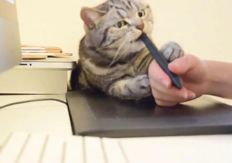 ガシッ!!「ペンタブというのはこうやって使うにゃ」と教えてくれる猫ちゃんがありがた迷惑ww