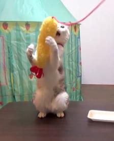 えびの天ぷら大好き〜♡宙を舞う「えび天」に夢中でかぶりつく猫ちゃんが楽しそう♪