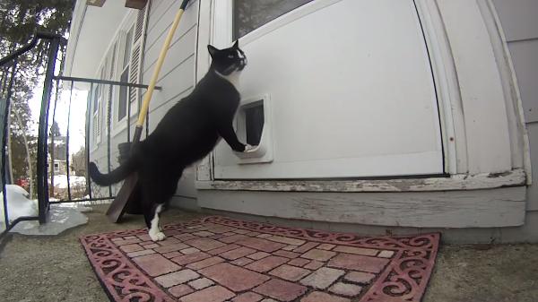 ピンポーン♪ドアを開けてくださいな♪呼び鈴を押してうちに入るお利口な猫ちゃん