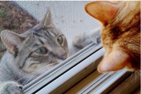 『入れて下さ~い!』野良猫たちが助けを求めに集まって来る噂の家
