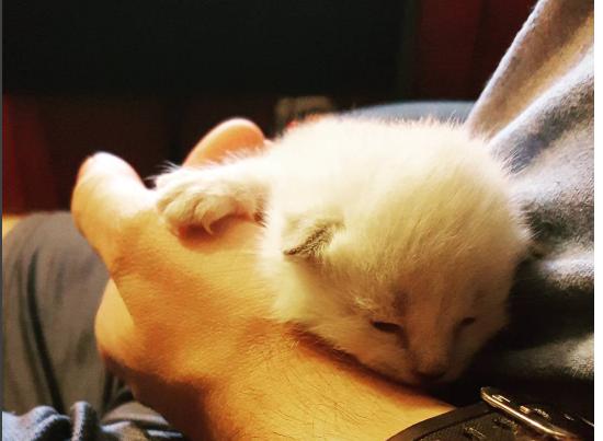 同僚がゴミ箱から救った小さな子猫『迎えに来たよ』施設へ引き取りに行ったポリスマン