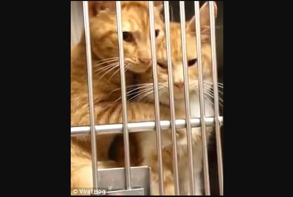 『大丈夫、私が一緒だから怖くないよ。』病院でこわがる姉妹を慰める猫