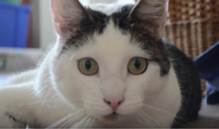 どこでも何度でもコロンとまわる♪前転の面白さに目覚めてしまった猫