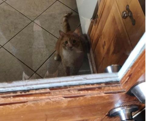 『ずっと見ていたいんだもん』猫は彼のママをジ~ッと見詰め続けます♡