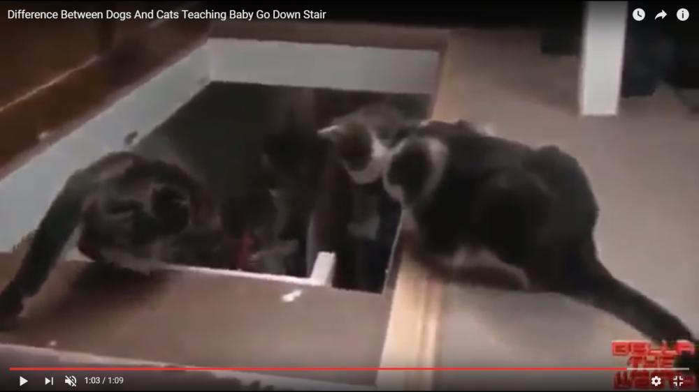 犬と猫の階段の降りかた講座♪衝撃のラスト…猫の教え方がひどすぎる…(笑)