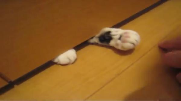 トイレに入るとドアの下から必ず現れる白い手…。触ってみると、ふわふわのプニプニ♪で可愛すぎた