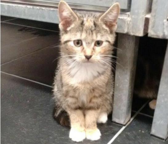 厳重に封をしたゴミ箱に捨てられていた猫の親子『あなたは特別な子猫よ』子猫を選んだ彼女