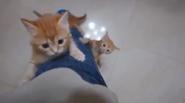 まるで木登り…??大量の子猫ちゃんたちが足によじ登ってくる姿がたまらないっ!!♡