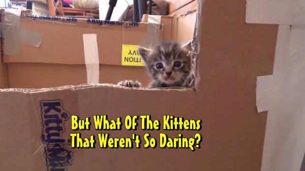 脱走を繰り返す子猫ちゃんたちVS飼い主!!なんとか脱走できないように対策した結果…(笑)