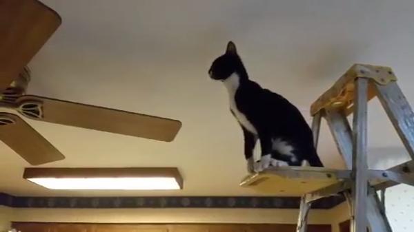 シーリングファンVS猫ちゃん(笑)シーリングファンに飛び乗ろうとした猫ちゃん…その結果とは?