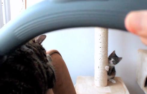「怖くないの??」猫ちゃんを掃除機に慣らす方法!