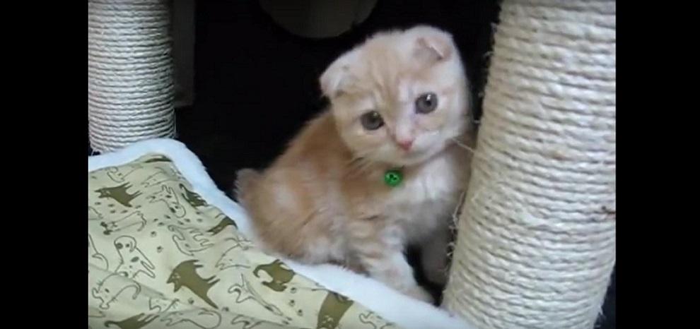 興味津々!初めてのキャットタワーに嬉しくてしょうがない子猫が超可愛い♡