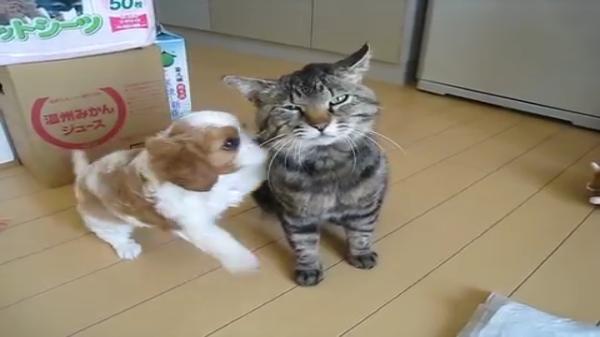 ワンちゃんにまとわりつかれてタジタジな野良猫さん。野良猫さんの迷惑そうな顔が笑えるww