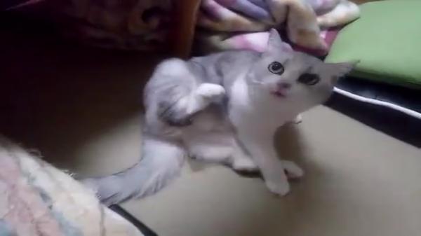 猫でもあるのねww熟睡していた猫ちゃんが突然起きたと思ったら、お尻に水たまりが…ww