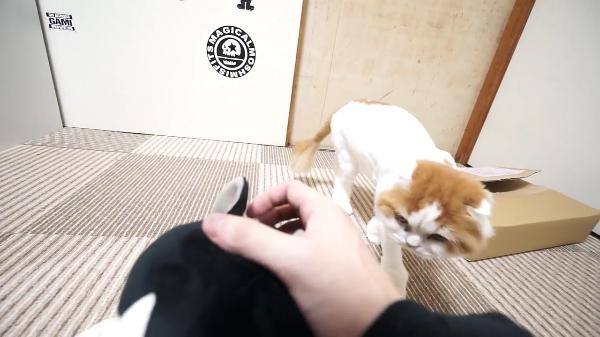 猫ちゃんそっちのけでぬいぐるみをひたすら可愛がってみたら、猫ちゃんはどんな反応をするのか検証!!可愛すぎる結果に♪