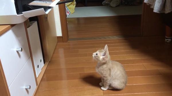 プリントアウトされるのを大人しく待っていたのに最後にプリンターに驚かされちゃった子猫がかわいいw