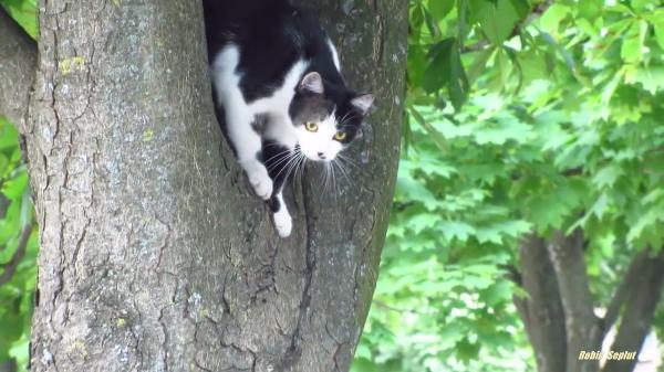 お父さん猫の木登り指導!!でも子猫ちゃんにはまだ早かったみたい…