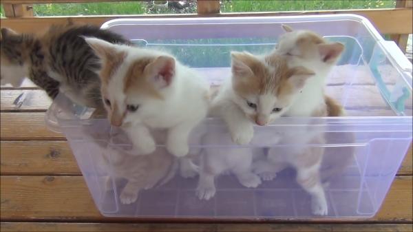 7匹の子猫ちゃんたちのモフモフ動画♪クリアケースの中でのわちゃわちゃ状態が可愛すぎる!
