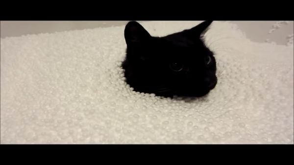 猫だって遊びた~い!♪発泡スチロールの砂場で遊ぶ猫ちゃん…でも最終的に夢中だったのは飼い主さん?(笑)