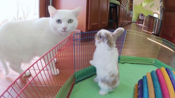 美しい白猫ちゃんと元気いっぱいの子うさぎちゃんたち♡可愛すぎて癒し効果がやばい!!