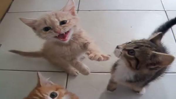 子猫の大合唱がうるさいけどカワイイ!ご飯が出たらシーン…