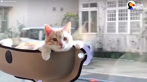 「ぼくの特等席にゃよ」専用シートでドライブする猫!リラックスし過ぎて・・・Zzz