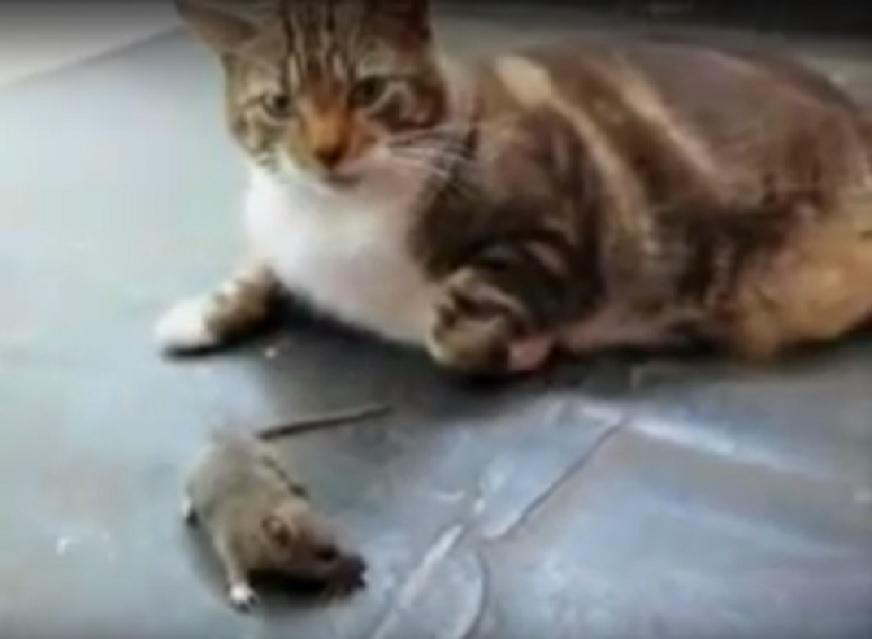猫ってネズミの天敵じゃないの?!思わず笑ってしまうネズミを怖がる猫さんが可愛い♡