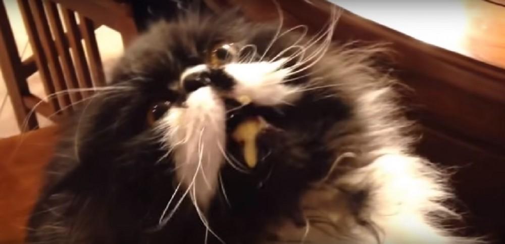 ごめん!笑った!猫さんにアイスクリームを食べさせたところ…えっ、大丈夫?猫さんが壊れた?!