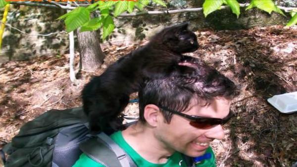 これぞ運命の出会い!!登山中に出会った子猫と相思相愛!その後は家族に♪