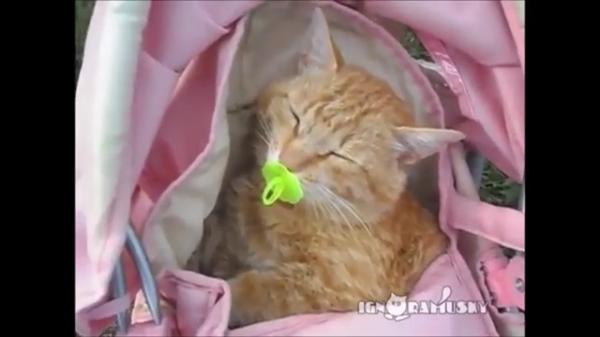 女の子とおままごと♪赤ちゃん役には何と猫ちゃんが!!本物の赤ちゃんみたいにおしゃぶりをして気持ち良さそうに寝る猫ちゃんが可愛すぎる!
