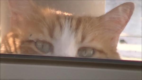行動までそっくりでカワイイ♪♪老犬になってしまったワンちゃんの代わりにパトロールする猫ちゃん!