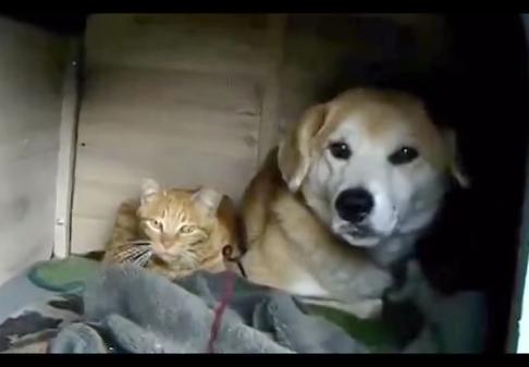 犬小屋で暮らすワンちゃんに突然現れた居候の野良猫ちゃん!2匹暮らしから家族へと変わった素敵なお話しです♪