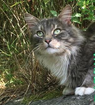 お腹をすかせてあてもなく彷徨っていた野良猫を1度だけ家に入れてあげるはずだったのに…