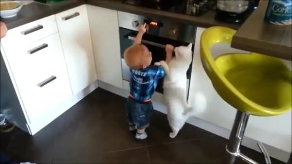 「危ないからダメにゃ〜!!」オーブンに触ろうとする息子ちゃんを必死に止める猫ちゃんがスゴイ!!