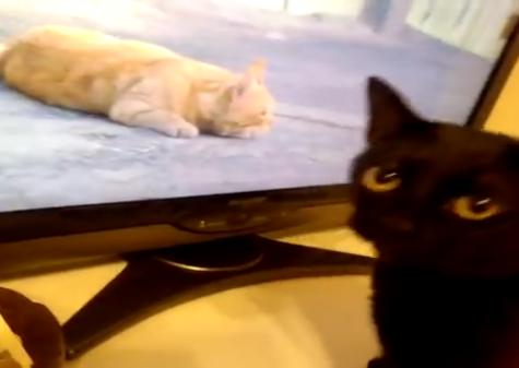 みんな大好き!「世界ネコ歩き」を観ていたら飼い猫がワラワラ大集合ww