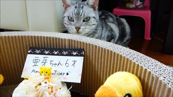 おネコ様用のちょっとお高いケーキをお誕生日にプレゼントした結果が悲惨www