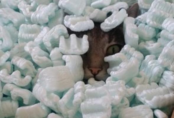 箱を開けたらパッキングピーナッツが入っていた!プチプチじゃないけど気に入っちゃった猫