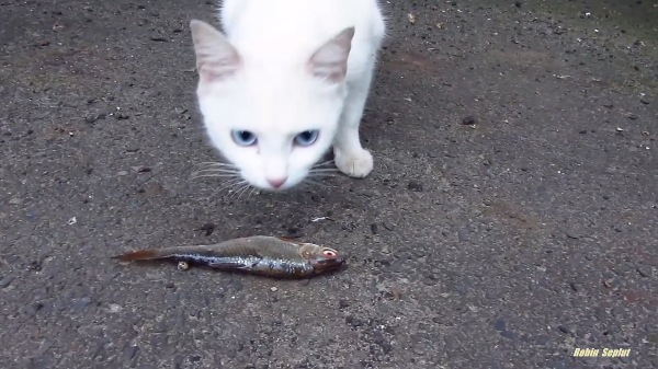 試してみました!猫が好きな食べ物は本当に魚?一番食いつきが良かったのは…