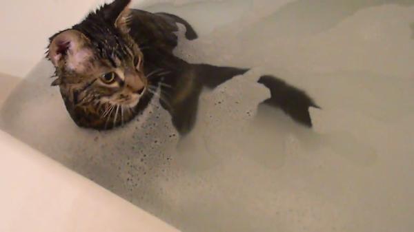 泡でマイペースに遊ぶ猫♪お風呂の中には面白いものがいっぱいだニャァ~