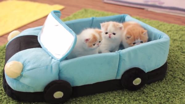 母猫の姿に子猫たちがみんな反応☆子猫たちが戯れて遊ぶ様子がキュート♡