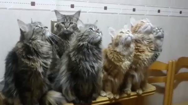 獲物を発見した6匹の猫ちゃんたち。同じ方向をじっと見つめる姿が圧巻すぎる…!!