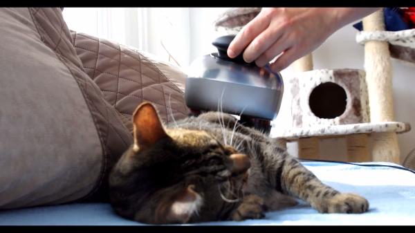 マッサージ機に夢中な猫ちゃん「あ~そこそこ……」