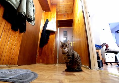 「飼い主さん、どこ??」ドアの前で鳴く猫ちゃんが健気~!