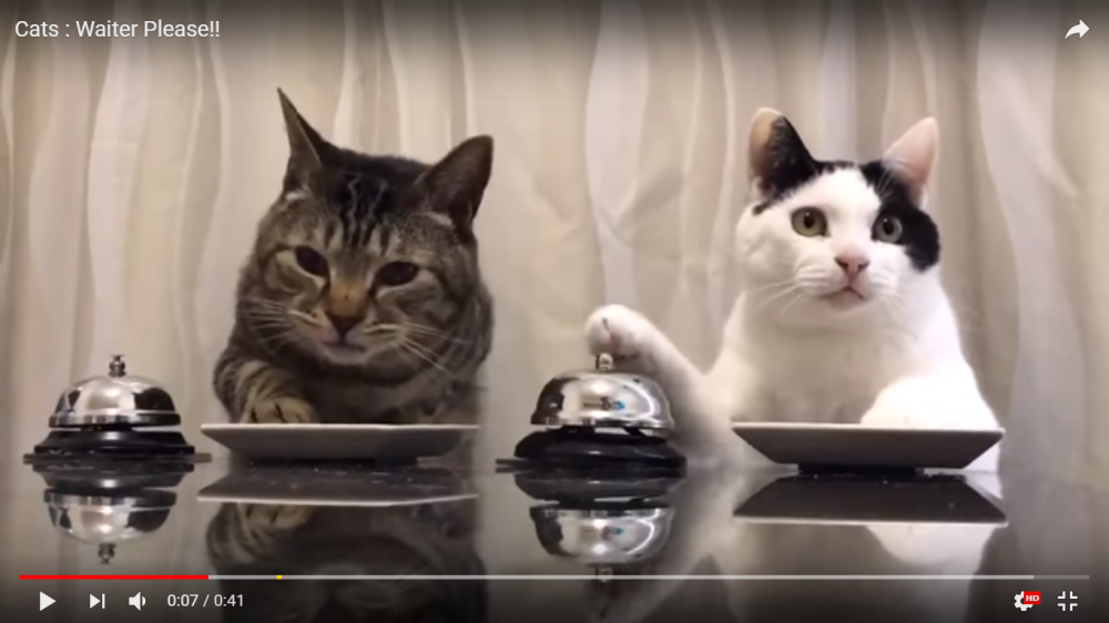 ベルを鳴らしておやつをゲット!二匹並んでベルを鳴らし続ける猫ちゃんズが可愛い!